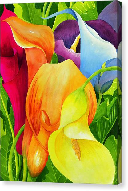 Lilies Canvas Print - Calla Lily Rainbow by Janis Grau