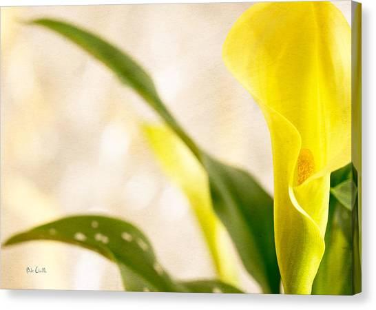 Calla Lily Canvas Print - Calla Lily Two by Bob Orsillo