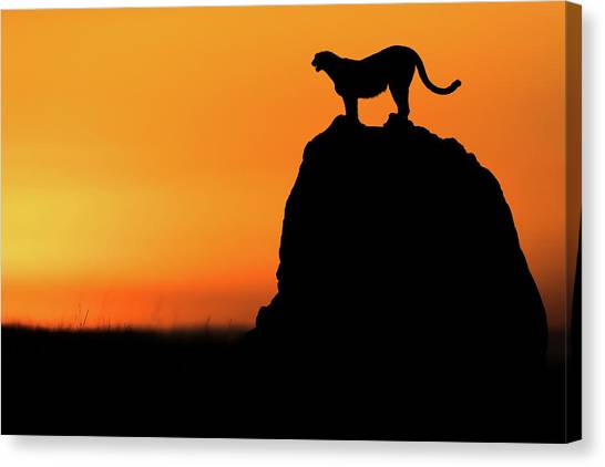 Calling For A Hunt Canvas Print by Faisal Alnomas