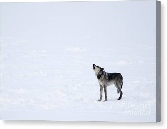 Howling Wolves Canvas Print - Calling Home by Deby Dixon