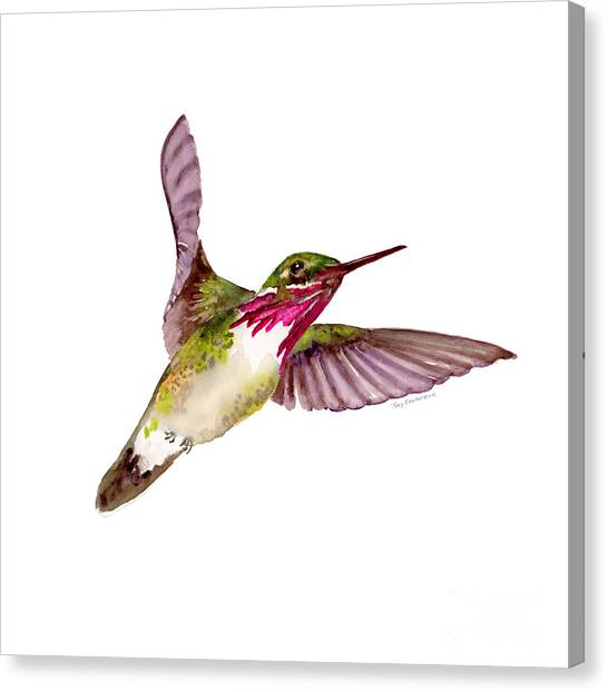 Small Birds Canvas Print - Calliope Hummingbird by Amy Kirkpatrick