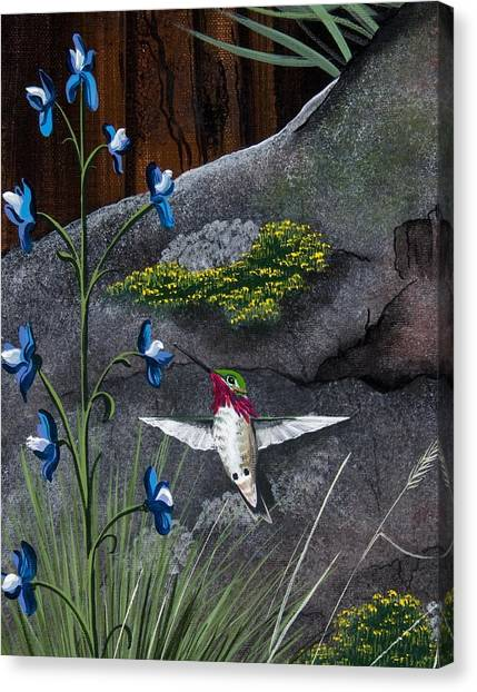 Calliope Hummingbird Canvas Print