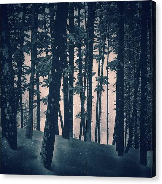 Forests Canvas Print - #callmeforest by Cody Haskell