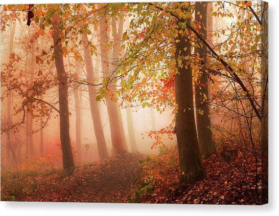 Autumn Leaves Canvas Print - Calm Walk In Colors. by Leif L??ndal