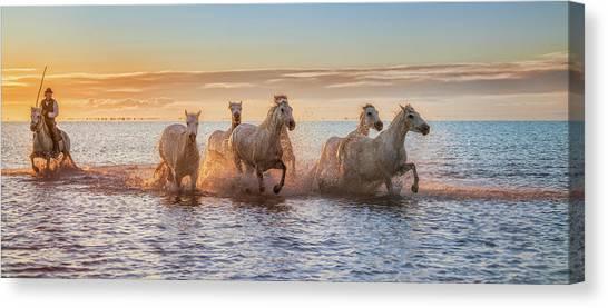 Cowboy Canvas Print - Camargue Horses II by Antoni Figueras