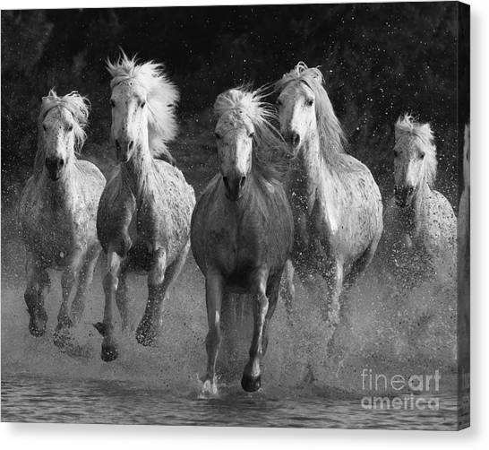Black and white horse canvas print camargue horses running by carol walker