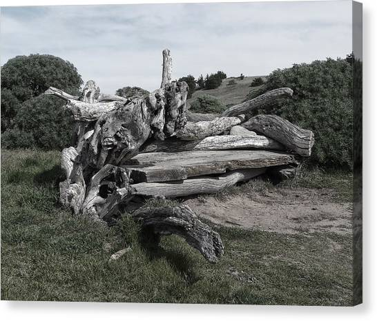 Cambria Driftwood Bench 3 Canvas Print