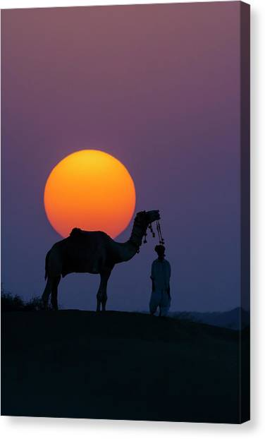 Thar Desert Canvas Print - Camel And Person At Sunset, Thar by Art Wolfe