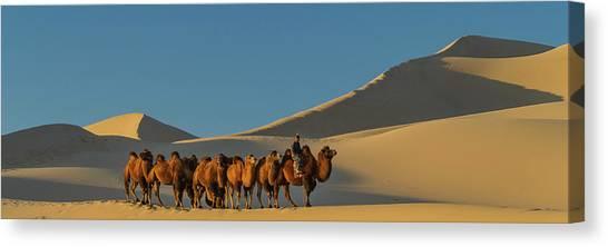 Gobi Desert Canvas Print - Camel Caravan In A Desert, Gobi Desert by Panoramic Images