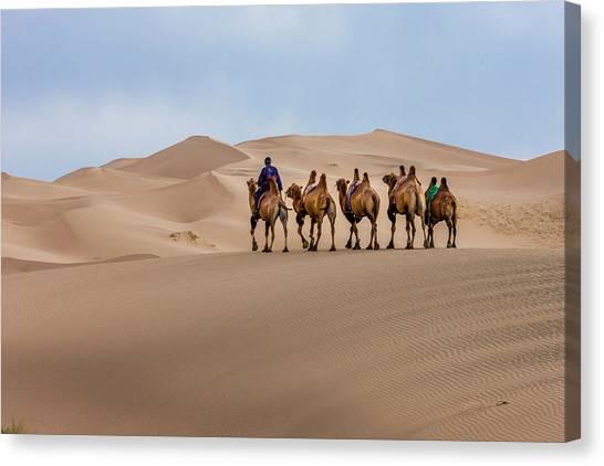Gobi Canvas Print - Camel Caravan In The Dunes by Tom Norring