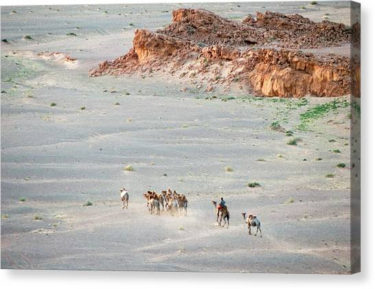 Gobi Desert Canvas Print - Camel Herders At Bayanzag, Or Flaming by Ted Wood