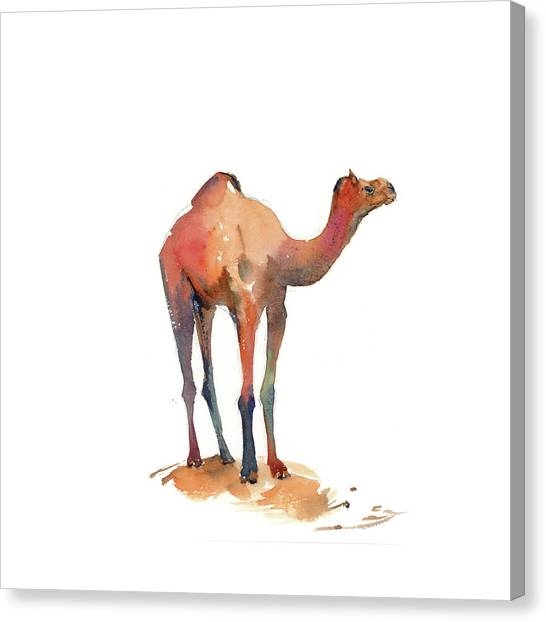 Camels Canvas Print - Camel I by Sophia Rodionov
