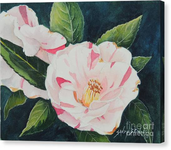 Camellia ...sold  Canvas Print