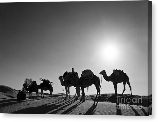 Sahara Desert Canvas Print - Camels by Delphimages Photo Creations