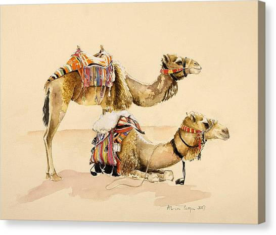 Sahara Desert Canvas Print - Camels From Petra by Alison Cooper