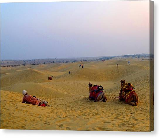 Thar Desert Canvas Print - Camels Kneeling Sand Dunes Thar Desert Rajasthan India by Sue Jacobi