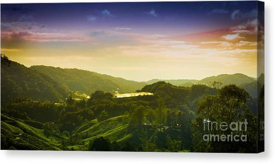 Cameron Highlands Canvas Print by Receb Parsel