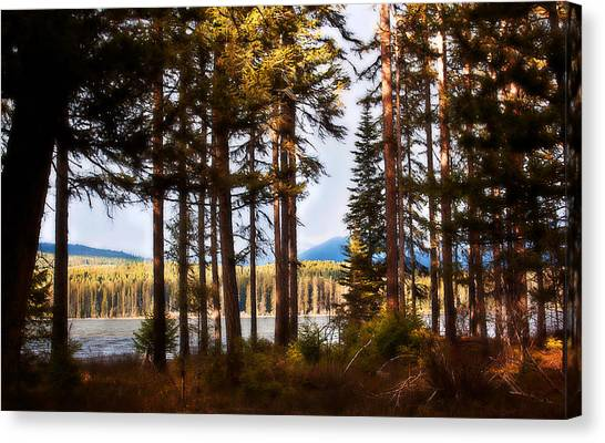Campsite Dreams Canvas Print