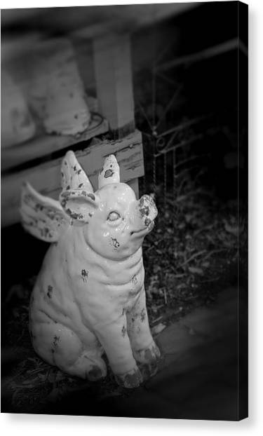 Canvas Print featuring the photograph Can A Pig Fly? by Kristi Swift