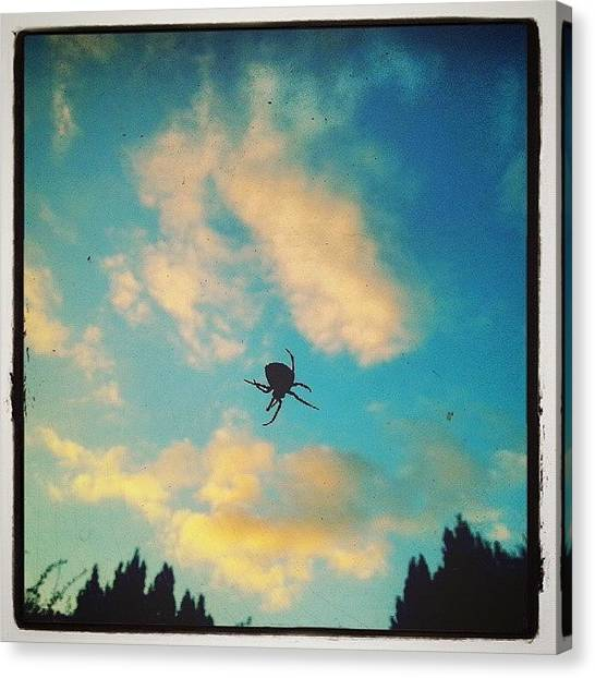 Spider Web Canvas Print - Can I Still Enjoy Looking At The #sky? by Alexandra Cook