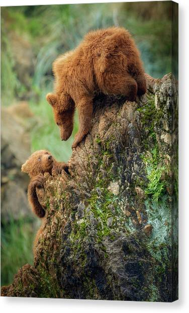 Brown Bears Canvas Print - Can You Help Me? by Sergio Saavedra Ruiz