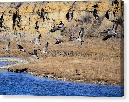 Canada Geese Along The Green River Canvas Print