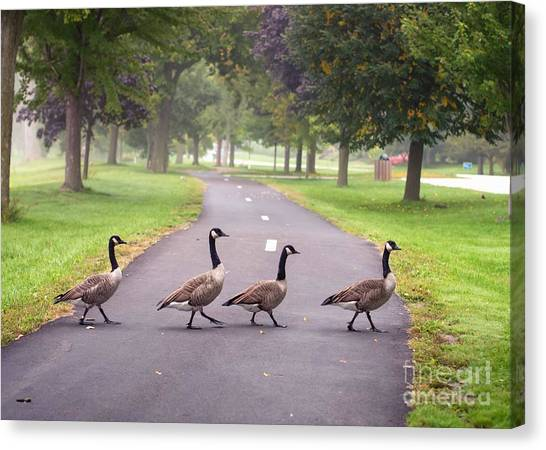 Canada Geese Four In A Row Canvas Print
