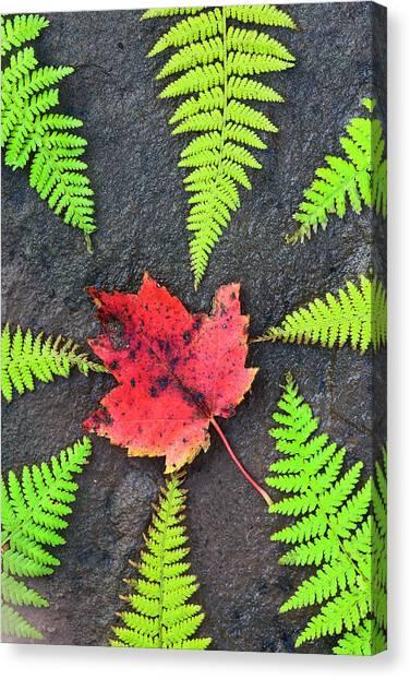 Cabot Trail Canvas Print - Canada, Nova Scotia, Cape Breton, Eight by Patrick J. Wall