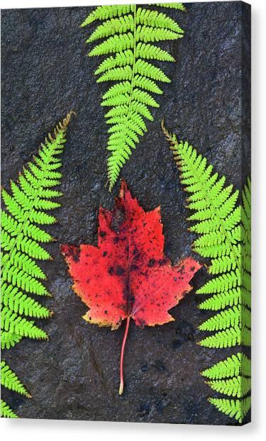 Cabot Trail Canvas Print - Canada, Nova Scotia, Cape Breton, Three by Patrick J. Wall