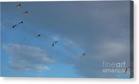 Canadian Geese 1 Of 3 Canvas Print