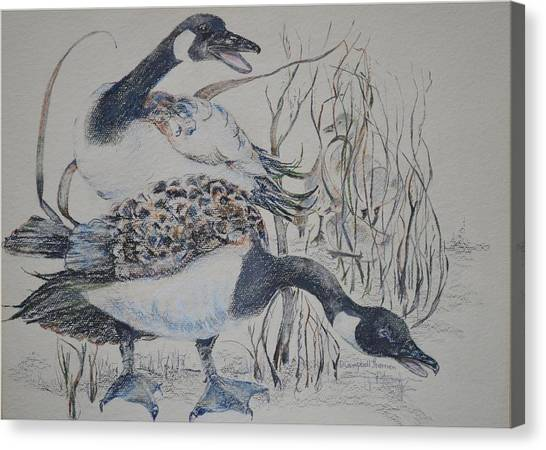 Canadian Geese Canvas Print by Dorothy Campbell Therrien