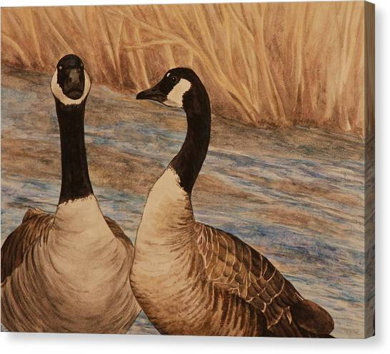 Canadian Geese Canvas Print