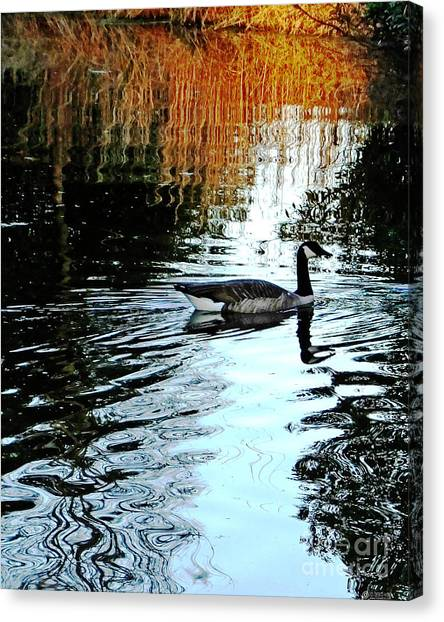 Canadian Goose At Burden  Canvas Print