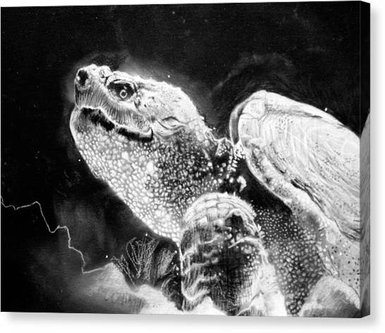 Snapping Turtles Canvas Print - Canadian Snapping Turtle by Sharlena Wood