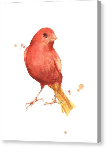 Canaries Canvas Print - Canary Bird by Alison Fennell