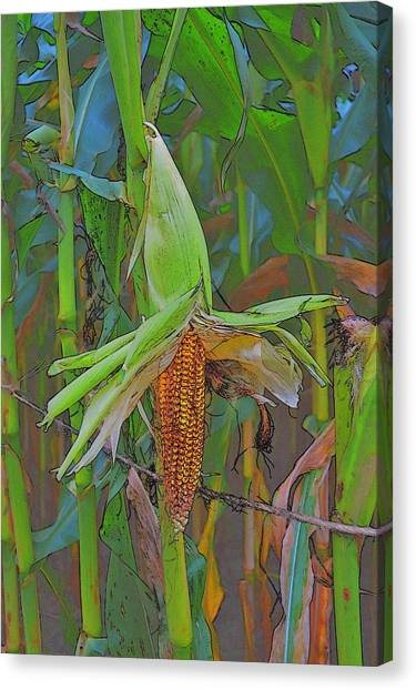 Candy Corn Canvas Print by Thomas  MacPherson Jr
