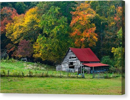 Maple Trees Canvas Print - Candy Mountain by Debra and Dave Vanderlaan