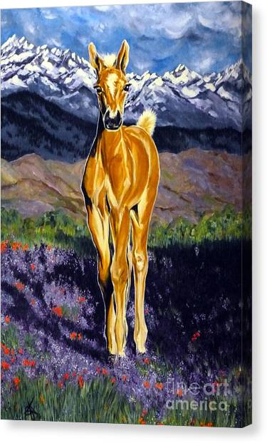 Candy Rocky Mountain Palomino Colt Canvas Print