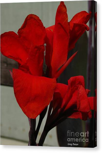 Canna Canvas Print by Greg Patzer