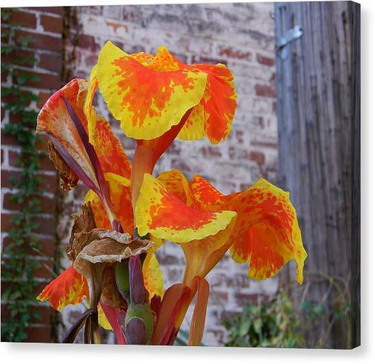 Canna Lily And Background Canvas Print by Warren Thompson