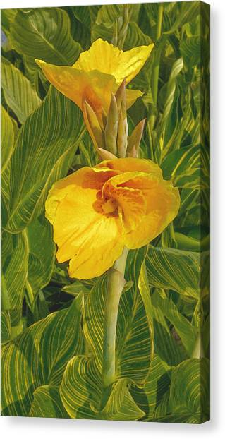 Canvas Print featuring the photograph Canna Lily Artified by David Coblitz