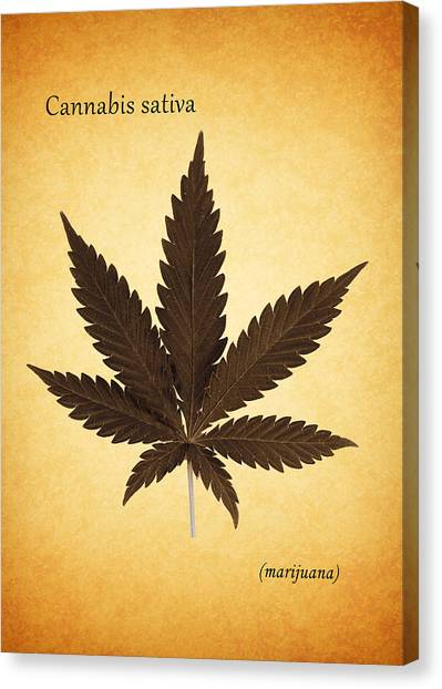 Marijuana Canvas Print - Cannabis Sativa by Mark Rogan