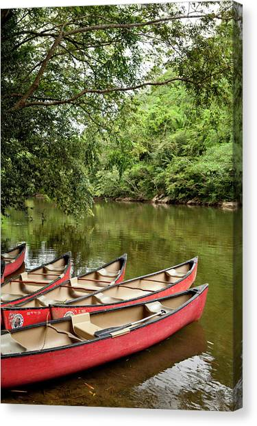 Belize Canvas Print - Canoeing The Macal River In Jungle Area by Michele Benoy Westmorland