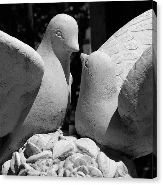 Lovebirds Canvas Print - #canon #eos #canoneos #1100d by Jan L Artuz