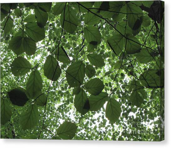 Canopy In Green 3 Canvas Print
