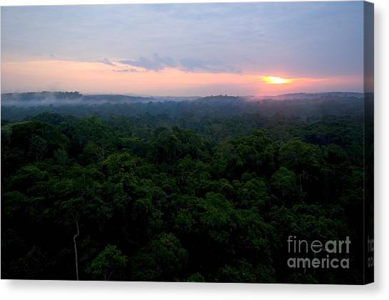 Amazon Rainforest Canvas Print - Canopy Of Amazon Rain Forest At Sunrise by Gregory G. Dimijian, M.D.