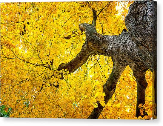 Lush Canvas Print - Canopy Of Autumn Leaves by Tom Mc Nemar