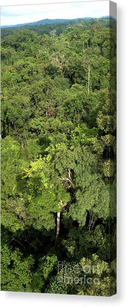 Amazon Rainforest Canvas Print - Canopy Of Brazilian Rain Forest by Gregory G. Dimijian, M.D.