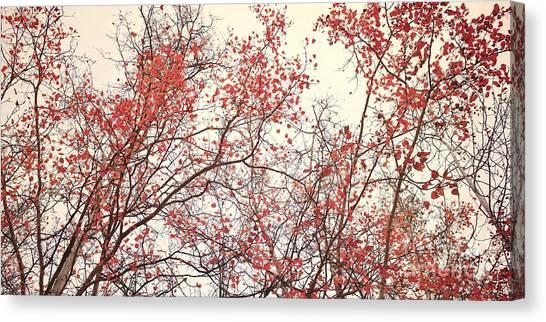 Birch Canvas Print - canopy trees II by Priska Wettstein
