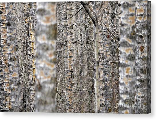 Can't See The Wood For The Trees Canvas Print